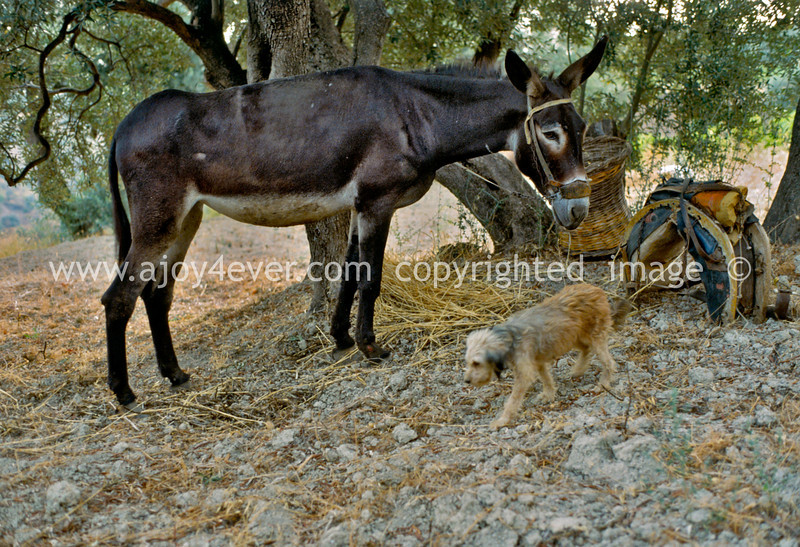 guardavalle, village, countryside, pic_173abook3L.psd .jpg