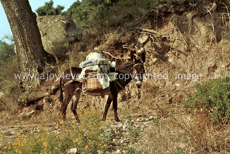 guardavalle, village, countryside, pic_254book2L.psd. jpg