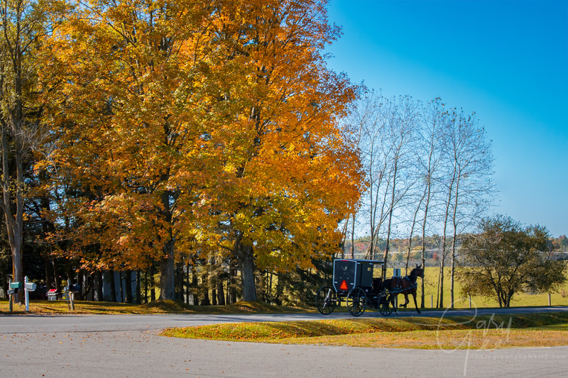 Amish Buggy in the Fall