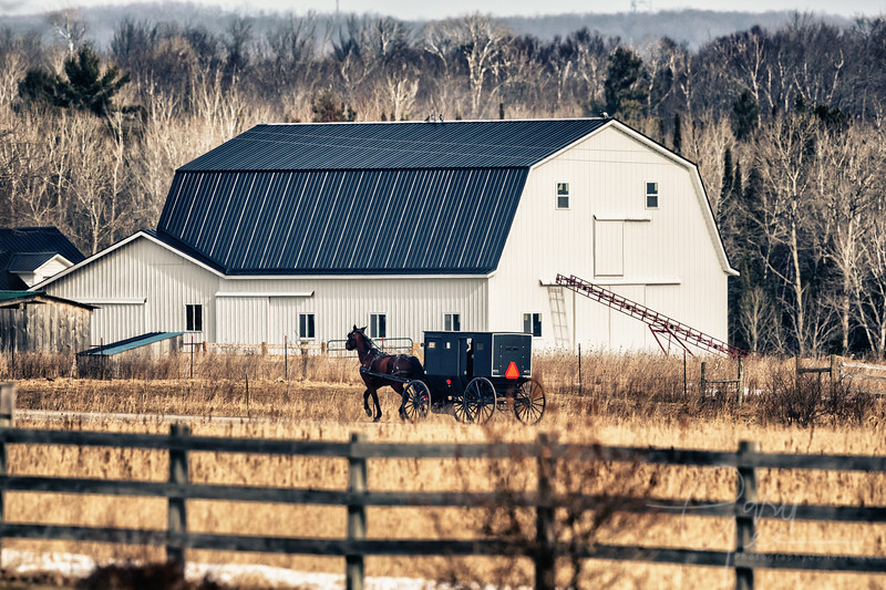 Amish Buggy and Barn Michigan