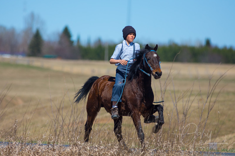 Amish boy on young horse