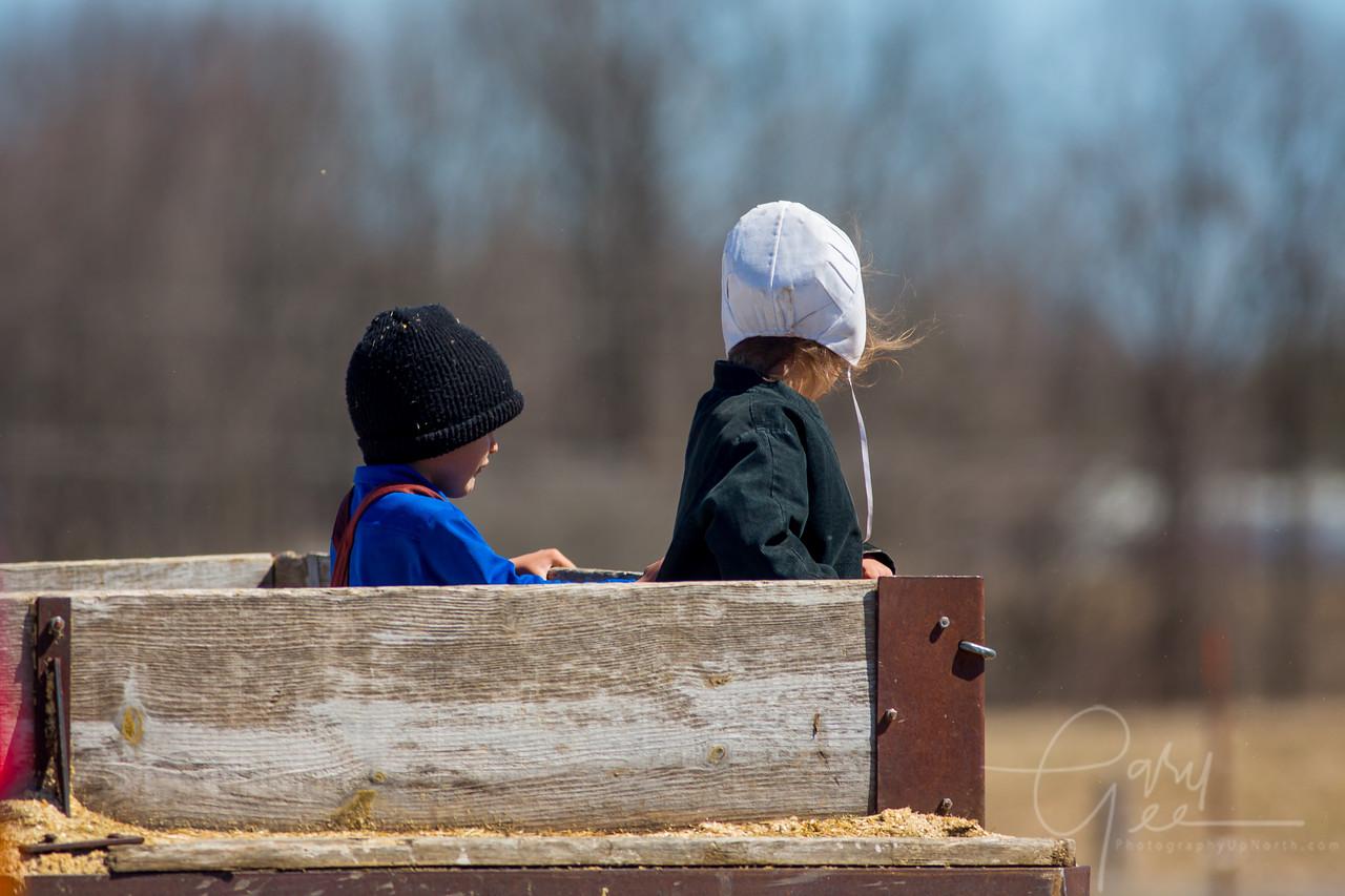 Amish Children in wagon