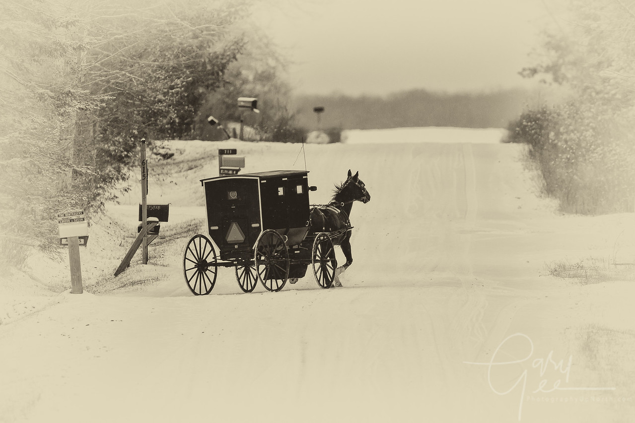 Amish buggy in the winter - Mio MI