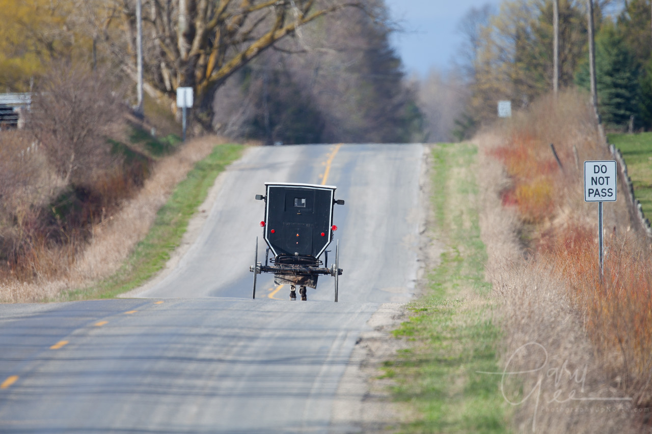 Amish Buggy spring 2012