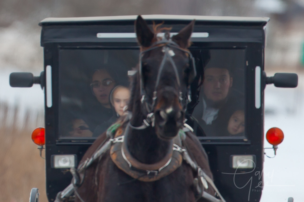 Amish family in horse drawn buggy in Michigan