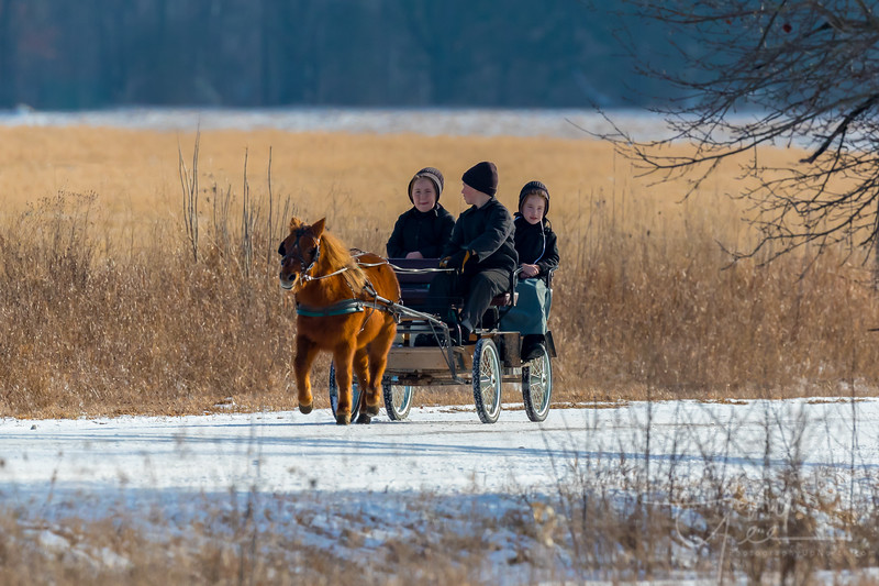 Young Amish School Children in Pony Drawn Buggy over a Light Spring Snow Dusting