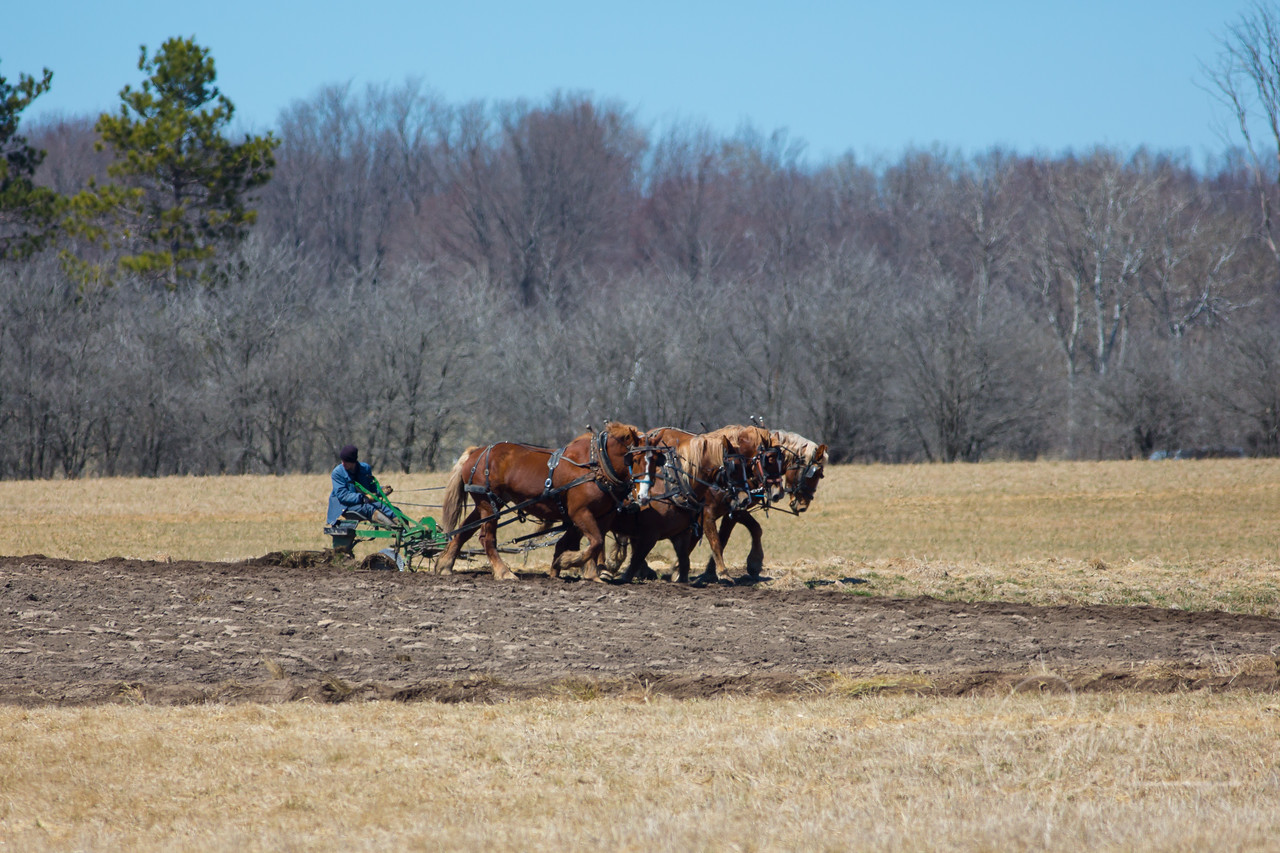 Young Amishman  preparing the fields for spring planting