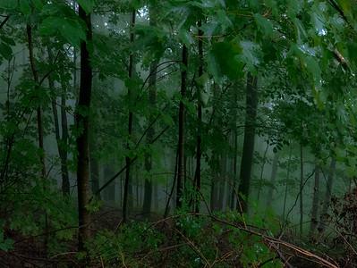 Misty Green