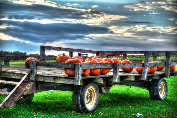 Oct 24 - Leftover Pumpkins<br /> <br /> Thanks again for your nice comments!