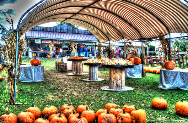 Oct 23 - Pumpkins Under the Canopy<br /> <br /> Another HDR image from 5 images each 1 fstop difference