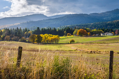 Trout Lake, WA Meadow in Autumn - 1
