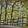 Oct 9 - Fence Line along a Country Road in WV<br /> <br /> Thank you for all your nice comments on the barn image I posted yesterday!  This image was taken along the road by that barn.