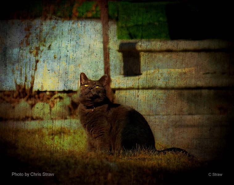 yelloweyedcat