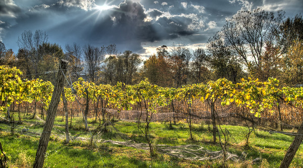 Oct 27 - The Little Vineyard<br /> <br /> Thanks so much for all your comments especially since I haven't had time to return the favors for quite awhile!
