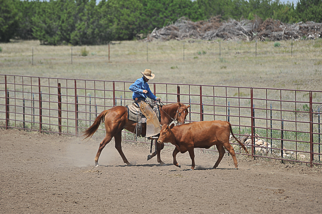 2013 Sept 14 WWR Horse Sale-7783