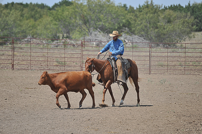 2013 Sept 14 WWR Horse Sale-7785