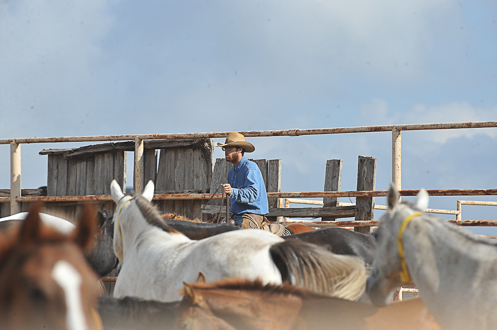 2013 Sept 14 WWR Horse Sale-7496
