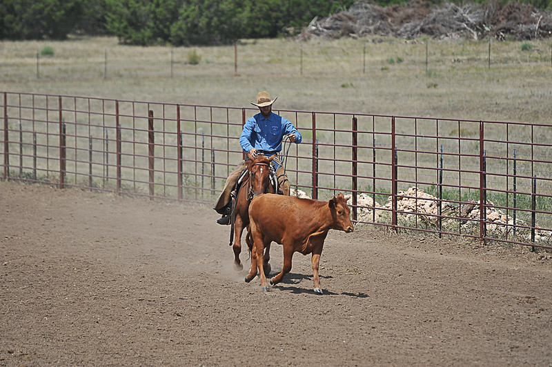 2013 Sept 14 WWR Horse Sale-7784