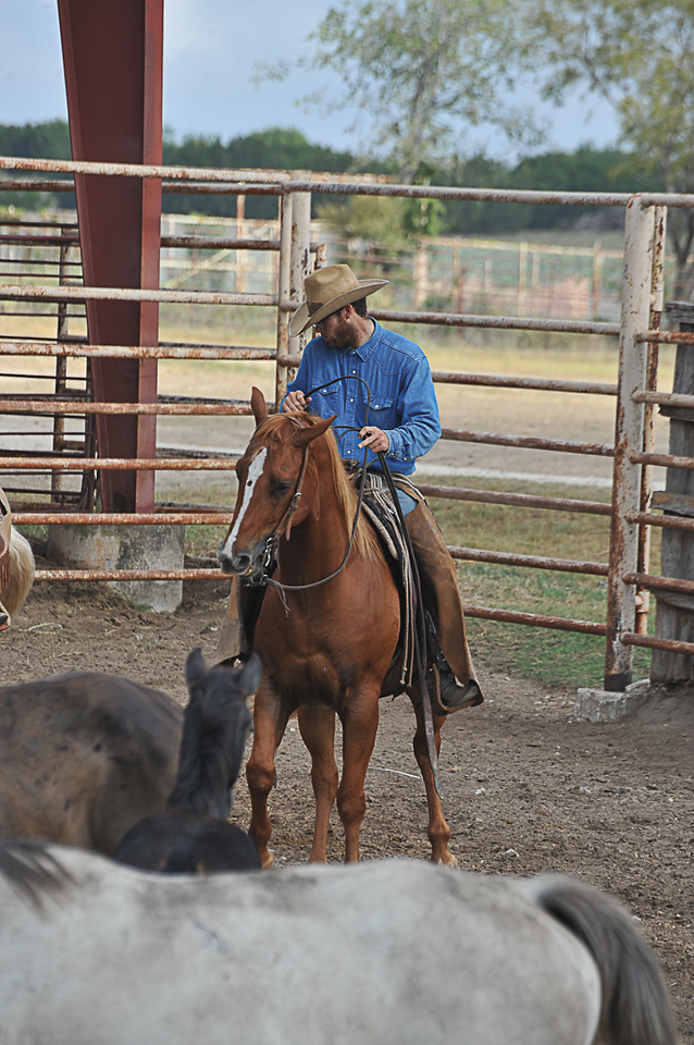 2013 Sept 14 WWR Horse Sale-7519