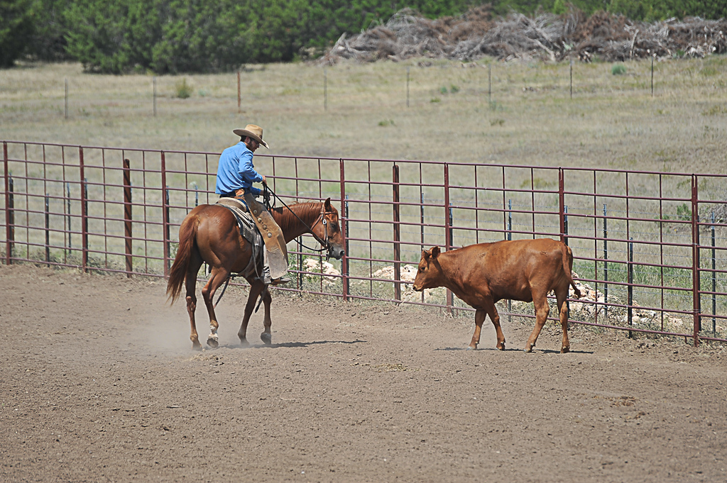 2013 Sept 14 WWR Horse Sale-7782
