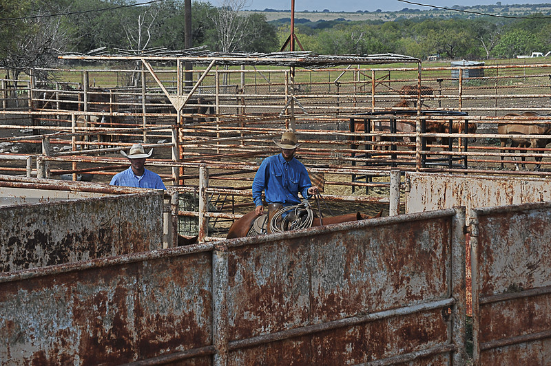 2013 Sept 14 WWR Horse Sale-7534