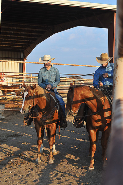 2013 Sept 14 WWR Horse Sale-7549