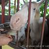 Countryside-Staples-Pony-Ride