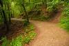 Eltz Forest Path