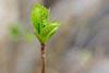 Spring Unfurls