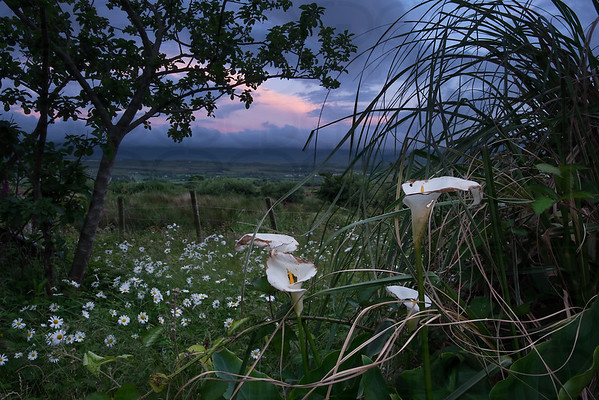 Sunset on the Lillies