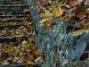 Leaves & Stone