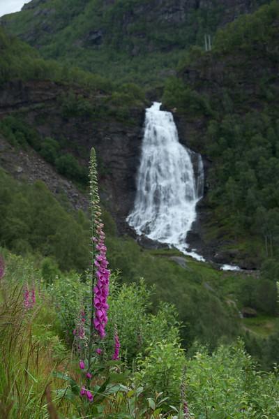 Foxglove & Waterfall