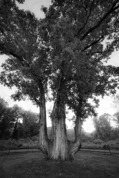 The Signal Tree in Mono