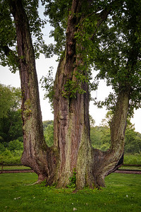 Signal Tree Portrait