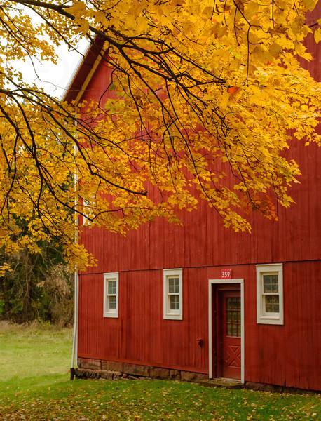 Golden Leaves & Red Barn