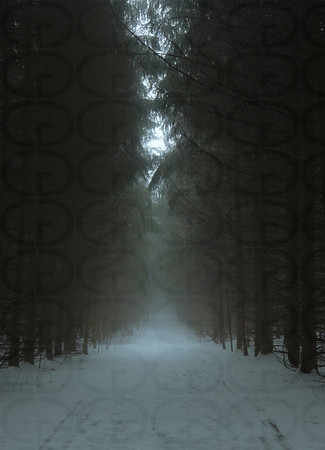 The Tree Farm Trail