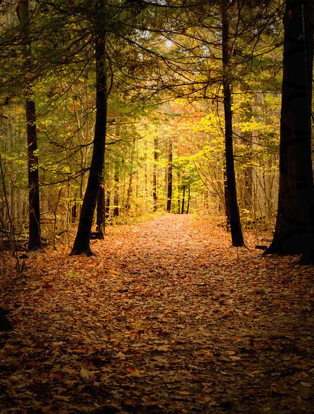 The Magic Autumn Light