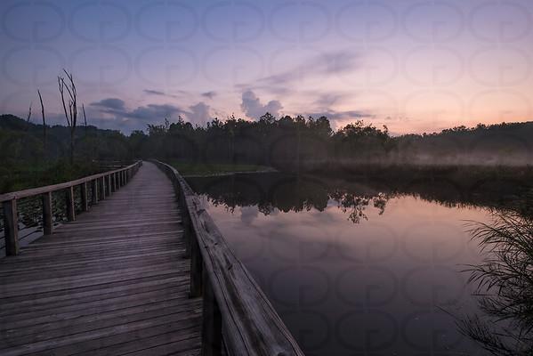 The Beaver Marsh