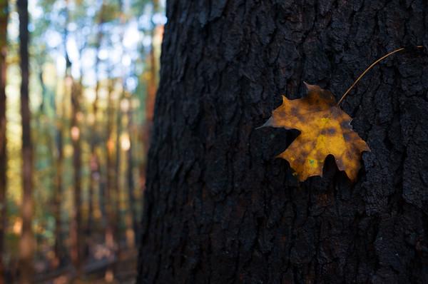 Hiking Spree 5