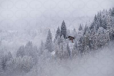Refuge in the Fog