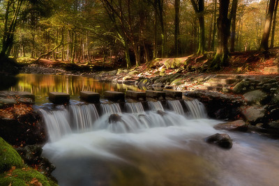 The Stepping Stones, Tollymore Forest-1L8A8449