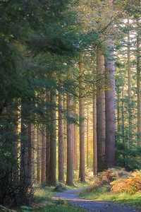 Tollymore Forest-1L8A8461