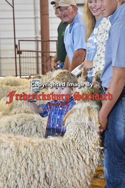 County Fair Livestock Showing 8-30-17