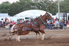 Horse Pulls (6)