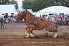 Horse Pulls (11)