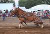 Horse Pulls (12)
