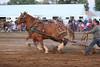 Horse Pulls (13)
