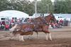 Horse Pulls (8)