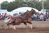 Horse Pulls (5)