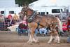 Horse Pulls (1)